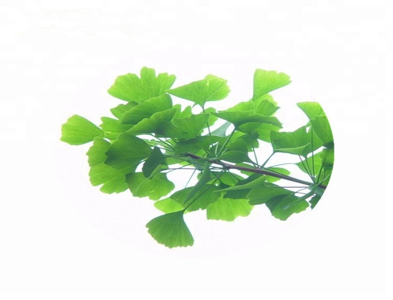 Ginkgo Biloba extract water soluble